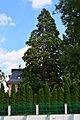 Baden - Villa Hahn - Naturdenkmal BN-125.jpg