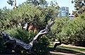 Balboa Park, San Diego, CA, USA - panoramio (42).jpg