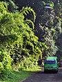 Bambus multip 160518-0059 stgd.JPG