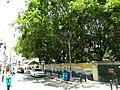 Bangalore Church street trees 2.jpg