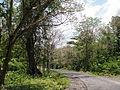 Baratang Andaman 4170088.JPG