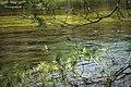 Barcazas de pino sobre un río lleno de vida - panoramio.jpg