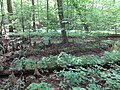 Battle Creek Cypress Swamp 48.jpg