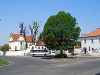 Bechlín, strom na návsi (1).JPG