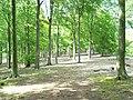 Beeches, Clarendon Hill - geograph.org.uk - 480008.jpg