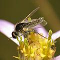 Beefly (15045345166).jpg