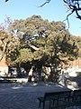 BeijingConfuciusTemple6.jpg