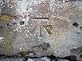 Bench Mark, Bangor - geograph.org.uk - 1743397.jpg