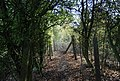 Bend in the path north of Philpots Lane - geograph.org.uk - 1535909.jpg
