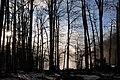 Berngat im Plättelenwald 3.JPG