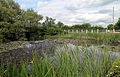Betts Lane and Common Road junction pond at Nazeing, Essex, England 03.JPG