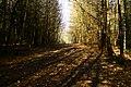 Between The Trees - panoramio.jpg