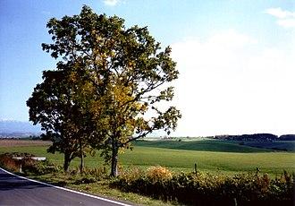 Biei, Hokkaido - Image: Biei tree 2003