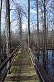 Big Hill Pond State Park Trail 8.jpg