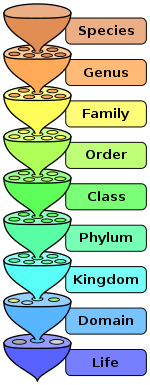 The various levels of the scientific classification system.