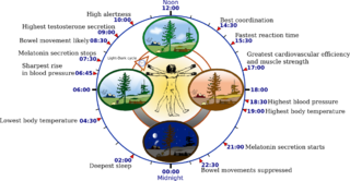 Chronobiology field of biology that examines periodic (cyclic) phenomena in living organisms