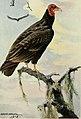 Bird lore (1919) (14750043112).jpg