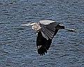 Birds (17544713508).jpg