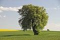 Birnbaum Hohbach 02.jpg
