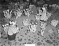 Bloemententoonstelling Bloemlust Lisse, Bestanddeelnr 906-2985.jpg