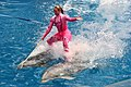 Blue Horizons Dolphin show (8803758510).jpg