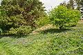 Bluebells by Venford Reservoir (4285).jpg