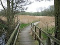 Boardwalk on Stour Valley Walk in Stodmarsh Nature Reserve - geograph.org.uk - 1251069.jpg