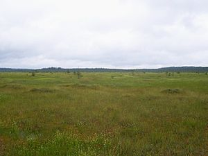 Central Forest Nature Reserve - Staroselsky Mokh swamp