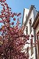 Bonn, Breite Straße -- 2020 -- 6492.jpg