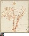Boom, circa 1712 - circa 1799, Groeningemuseum, 0041444000.jpg