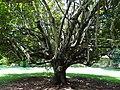 Botanical Garden of Peradeniya 72.JPG