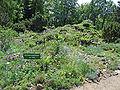 Botanischer-garten-ffm012.jpg
