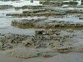 Boulder clay at East Hoyle Bank - geograph.org.uk - 237270.jpg