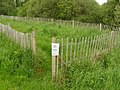 Brackagh Moss - geograph.org.uk - 1328008.jpg