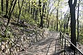 Brno Wilsonův les cesta 1.jpg