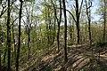 Brno Wilsonův les cesta 2.jpg