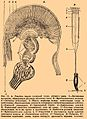 Brockhaus and Efron Encyclopedic Dictionary b16 817-2.jpg