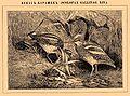 Brockhaus and Efron Encyclopedic Dictionary b5 336-0.jpg