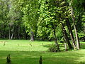 Brzesko, ul. Götza-Okocimskiego 6 park, 1900 nr 615228 (7).JPG