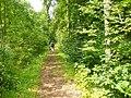 Buchenwald - Ehemalige Bahnlinie (Former Trackbed) - geo.hlipp.de - 40141.jpg