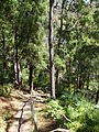 Budj Bim ‐ Mt Eccles National Park, Victoria, Australia 37.jpg