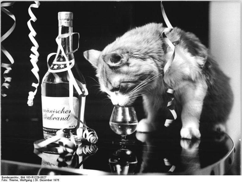 File:Bundesarchiv Bild 183-R1229-0027, Neujahrfest.jpg