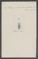 Buprestis - Print - Iconographia Zoologica - Special Collections University of Amsterdam - UBAINV0274 023 06 0017.tif