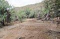 Butcher Jones Trail to Pinter's Point Loop, Tonto National Park, Saguaro Lake, Ft. McDowell, AZ - panoramio (78).jpg