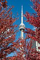 CN Tower in Autumn in Toronto.jpg