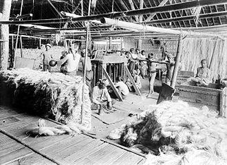 Manila hemp - The packaging of manila hemp into bales at Kali Telepak, Besoeki, East Java