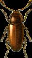 Caenoscelis ferruginea Jacobson.png