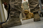 Camp Leatherneck Veterinary Clinic 110527-F-DT527-161.jpg