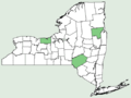 Campanula persicifolia NY-dist-map.png