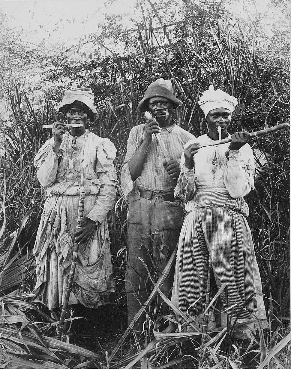 Cane cutters in Jamaica